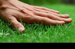 Fresh turf